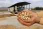 Iran beats US to take back top pistachio producer title